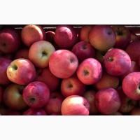 Яблоки Флорина Стоимость с НДС