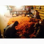 Принимаем заказы на заготовку грибов сморчок сухой. Лисички свежей и соленой и мороженой