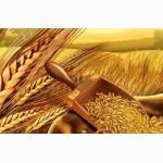 Продам: пшеницу, овес, ячмень