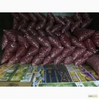 Продаем редис из собственного хозяйства оптом от 3х тон