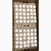 Закупаем непастеризованный яичный меланж