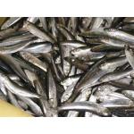 Продам Свежемороженая рыба , морепродукты оптом , прямые поставки с Дальнего востока
