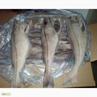 Пикша оптом со склада в Москве, доставка