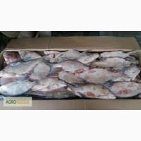 Мороженая рыба (густера, щука, лещ)