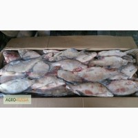 Мороженая рыба (густера, сазан, лещ)