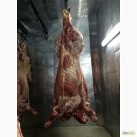 Продам мясо свинины, говядины, курицы