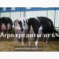 Племенной скот мясных пород