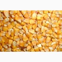 Срочно купим кукурузу фураж в порту Астрахань, на воротах морского порта