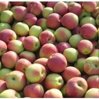 Яблоки Слава Победителям Стоимость с НДС
