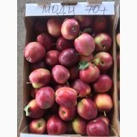 Яблоки Фрукты