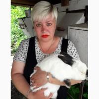 Продаются породистые калифорнийские кролики, 35 голов, возраст 1- ...