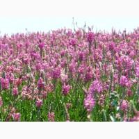 Эспарцет семена для посева 1- массовая репродукции сорта -Песчаный Зерноградский 3