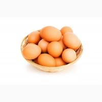 Яйца домашние фермерские оптом