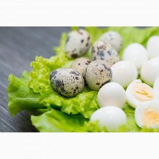 Яйцо перепелиное домашнее в продаже