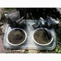 Сапропелевая искусственная почва и технология ее производства