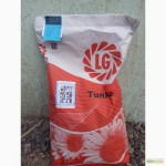 Семена классических гибридов подсолнечника Тунка от компании Limagrain