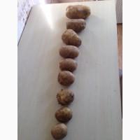 Купим картофель, чеснок, лук, морковь, свеклу. Самовывоз