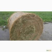 Сено посевных трав