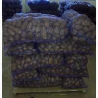 Картофель РБ оптом от производителя