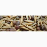 Семена вико-овсяной смеси