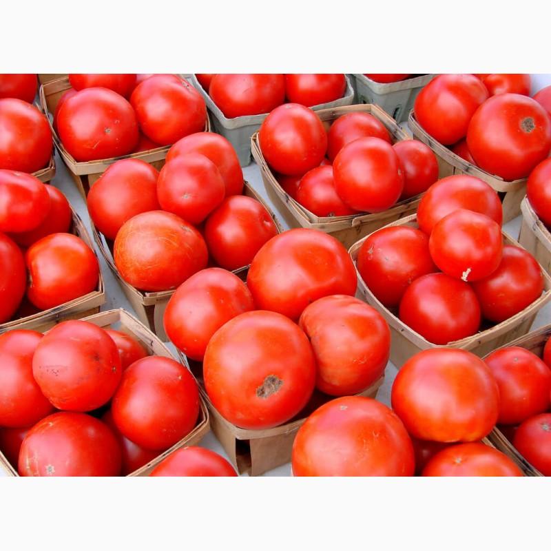 сорт помидор край