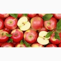 Натуральный концентрированный яблочный сок