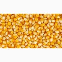 Срочно купим кукурузу фураж в порту Махачкала