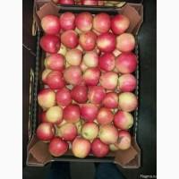 Яблоки Пинова