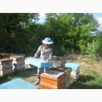 Продам пчелопакеты рут