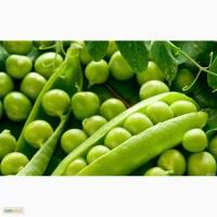 Продам: Семена гороха Аксайский усатый 5, РС1, ЭС