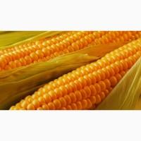 Кукуруза 3 класс в наличии 30.000 тонн