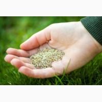 Семена тимофеевки луговой