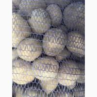 Картофель Гала 5+ 6р/кг