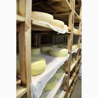 Сыр натуральный полутвердый Российский молодой