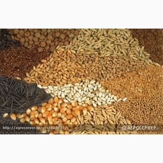 ООО НПП «Зарайские семена» продает зерносмесь оптом и в розницу