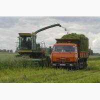 Сенаж многолетних трав (злакобобовый)