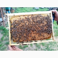 Пчелопакеты, пчелосемьи