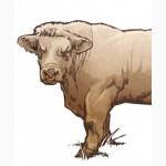 Закупим Крупно-рогатый скот в больших объемах