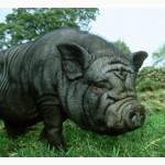 Стимулятор роста для свиней, поросят. Привесы 20-40%