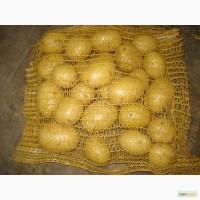 Куплю картофель оптом в Самаре