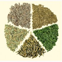 Многолетние травы оптом