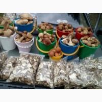Заготовим все виды лесных грибов и ягод на заказ индивидуально