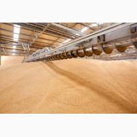 Пшеница 3 класс ГОСТ продовольственная оптом