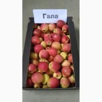 Яблоки оптом от фермеров Краснодарского края