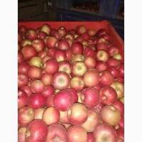 Яблоки оптом от производителя в большом объеме