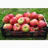 Яблоки Женева