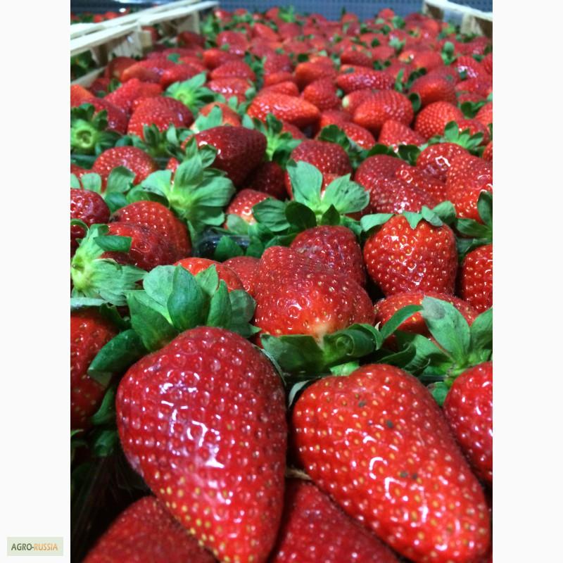 Где в москве купить свежие ягоды