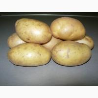 Продам продовольственный картофель