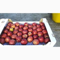 Яблоки сетевые опт