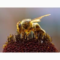 Продам пчел Крым